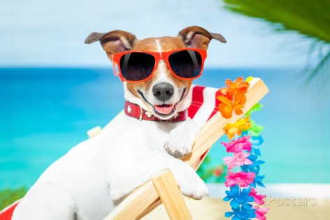 How to make sure your pet has a good time on vacation too